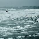 Seagull by Barry Doherty