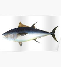 Bluefin Tuna Illustration Poster