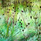 October English Meadow by David Tovey
