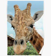 Giraffe Upclose Poster