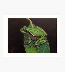 Pine Barrens Tree Frog Art Print