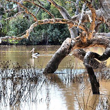 Lone Pelican on Billabong by GeorgeP