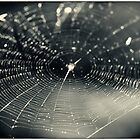 Web of Light - Araneidae Cyclosa conica Spider Web by MotherNature
