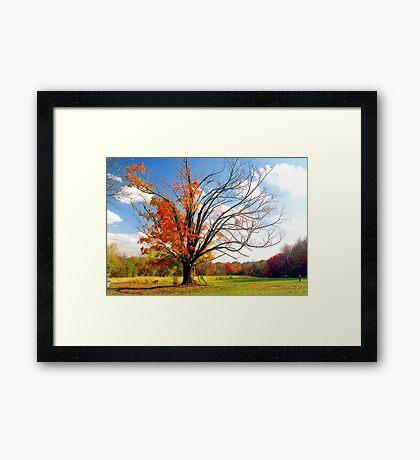 The Gina Tree Framed Print