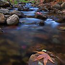 Colors along the Creek by Sue  Cullumber