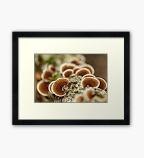 Parasite mushrooms on tree Framed Print