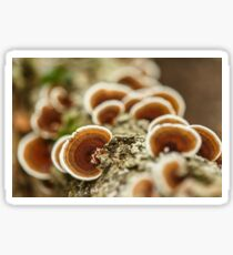 Parasite mushrooms on tree Sticker
