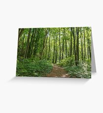 Deciduous forest in the summer Greeting Card