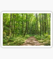 Deciduous forest in the summer Sticker