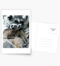 Baby Ring-tailed Lemur Postkarten