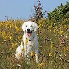 Ditte in the late summer flowers by Trine