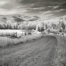 Any Road Will Take You There by John Rivera