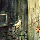 It's good to be the Rooster by John Rivera