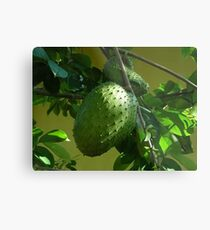 GUYABANO, THE SOURSOP FRUIT - Cancer Remedy- PICTURE/CARD Metal Print