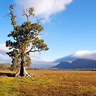 Cazneaux Tree, Wilpena Pound, South Australia. (Study #2) 2014 by johnrf