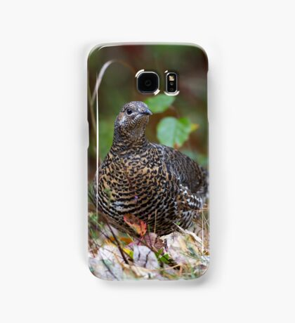 Spruce grouse in Algonquin Park Samsung Galaxy Case/Skin