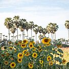 Sunflowers and Palm by Clara Go (missatgerebut)