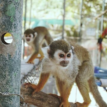 A Couple of Squirrel Monkeys by HumbleMister