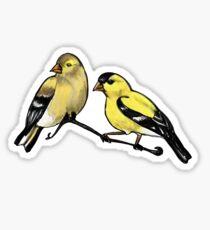 American Goldfinches  Sticker