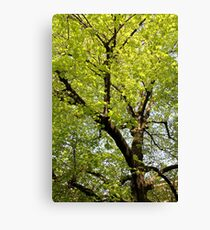 trees landscape Canvas Print