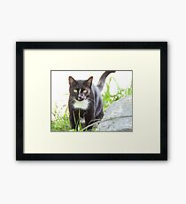 Tux the Kitty Cat Framed Print