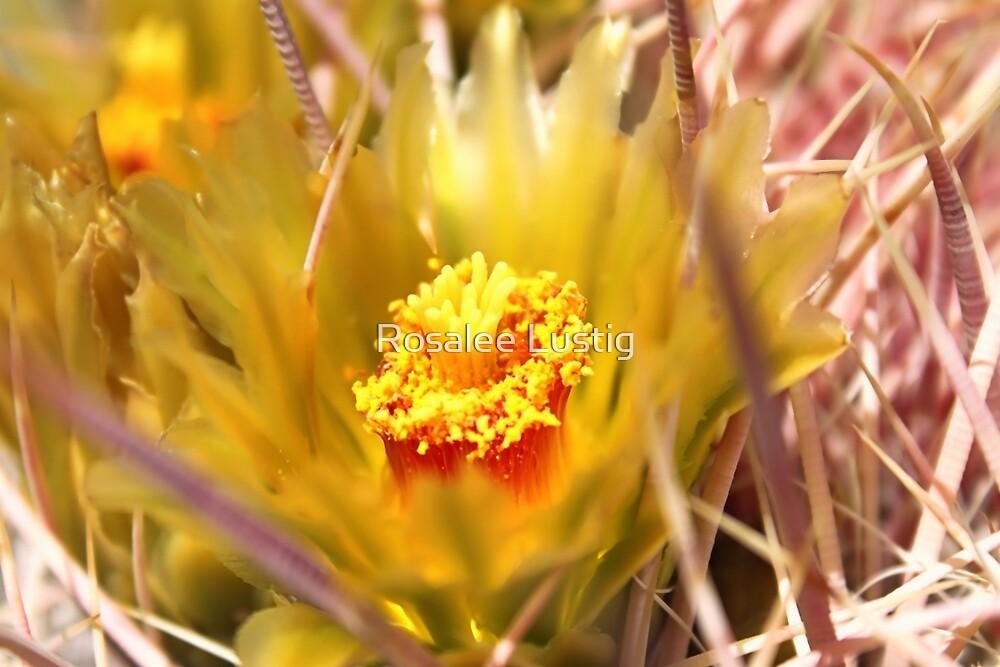 Barrel Cactus Bloom by Rosalee Lustig