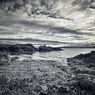 Seaweed on the Rocks by Linda Cutche