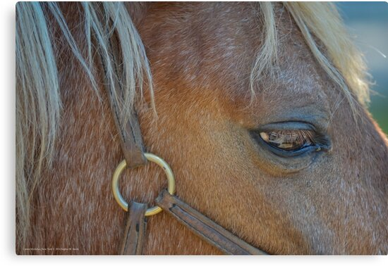 Equus Ferus Caballus - Eye Of The Horse | Center Moriches, New York by © Sophie W. Smith