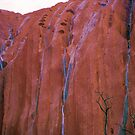 Waterfalls Running Down The Face Of Uluru at Dawn by Ronald Rockman