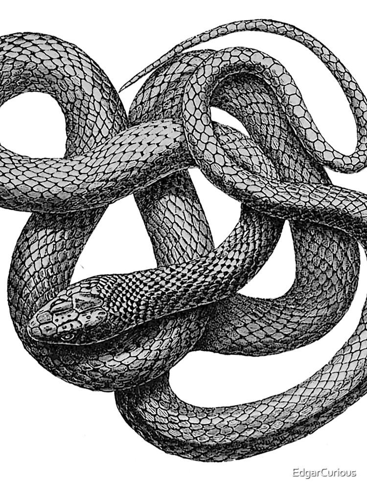 Große Schlange von EdgarCurious