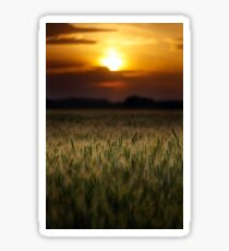 Wheat field at sunset, sun in the frame Sticker