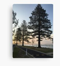 Trees! Canvas Print