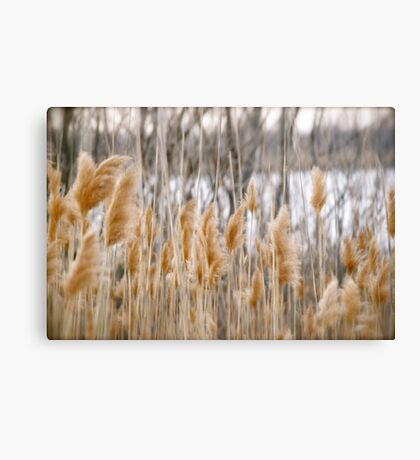 Reeds of Winter Canvas Print