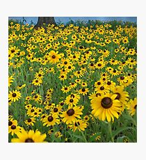 Susans in the Wind Photographic Print