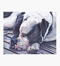 American Bulldog Fine Art Painting Photographic Print