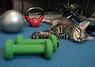 Mikino doesn't workout on Caturday's!  by Jaeda DeWalt