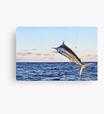 Marlin Canvas - Gold Time Canvas Print