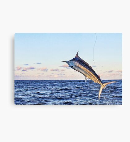 Marlin Canvas - Gold Time Canvas Print