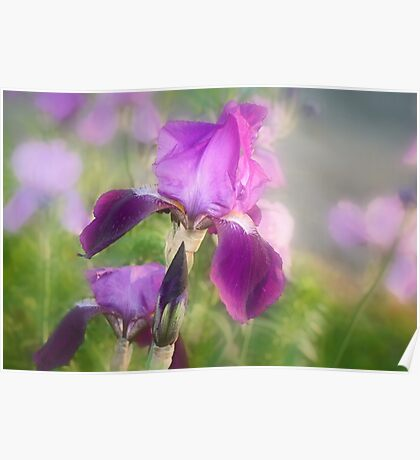 Mood Lavender Poster