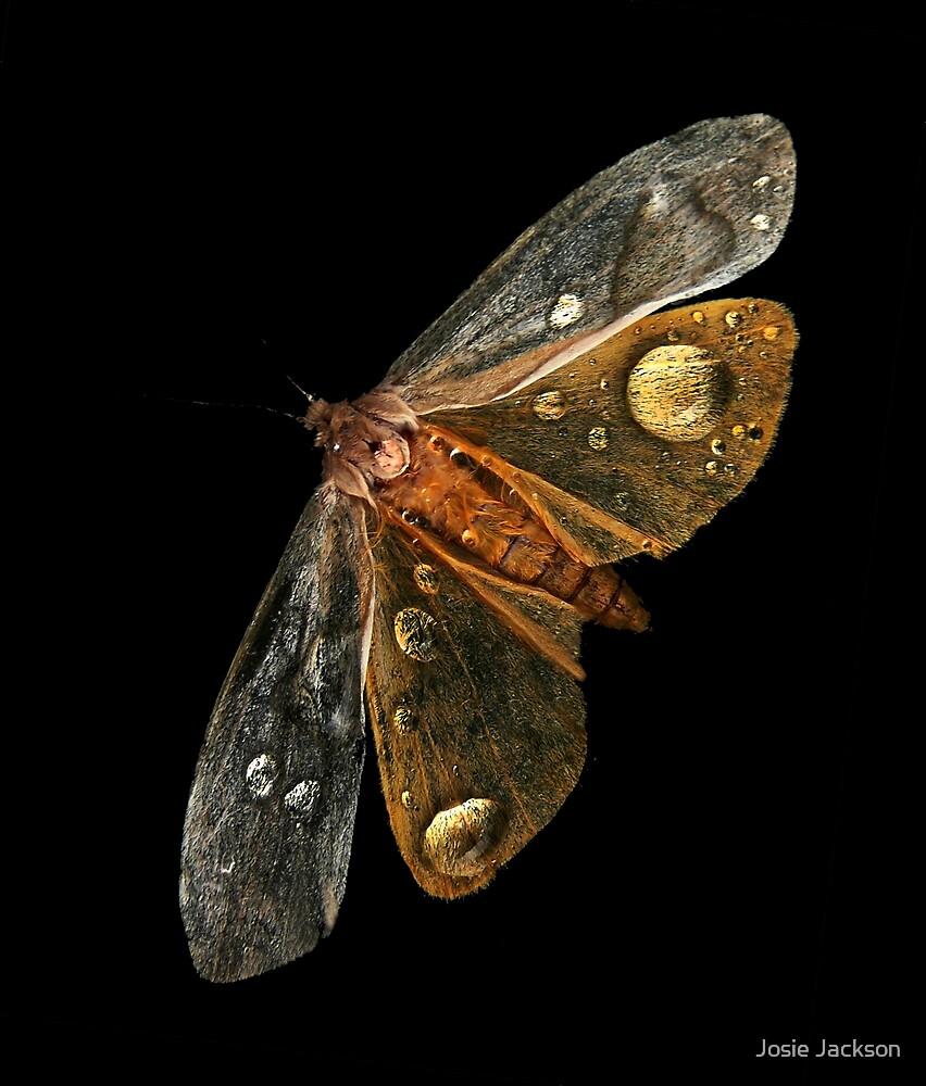 Moth  by Josie Jackson