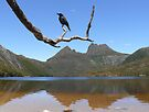 A Bird on a Limb by Josie Jackson