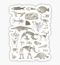 Paleontology Illustration Sticker