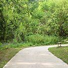 A Walk Through Missouri Woods by Ben Waggoner