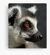 Contemplative Ring-tailed Lemur Canvas Print