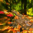 And The Leaves Came Tumbling Down by jules572