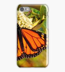 Monarch Butterfly, Mannum Falls, SA iPhone Case/Skin