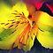 Avatar/Alstroemeria (Peruvian Lily) -