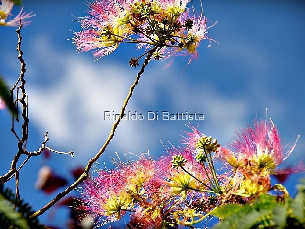 A Silken Spring - New Blossoms by Rinaldo Di Battista