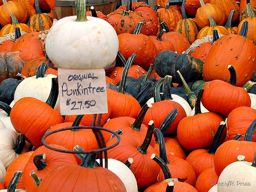 """Pick Your """"Punkin"""" by Grinch/R. Pross"""
