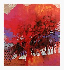 The big red tree in my courtyard Photographic Print